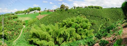 Fotografía June  16, 2010: Colombian coffee plantation