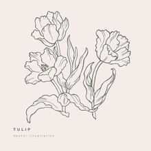 Hand Draw Vector Tulip Flowers...