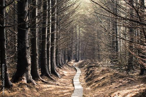 Camino a través de un bosque otoñal en Irlanda