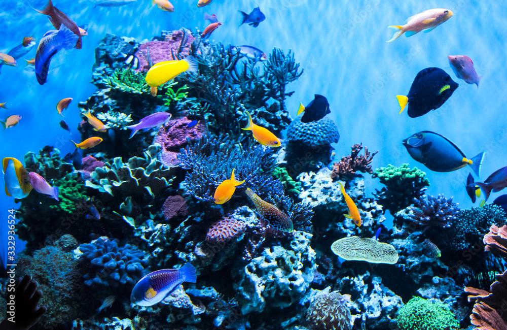 Fototapeta Aquarium in the Monterey Aquarium
