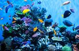 Aquarium in the Monterey Aquarium