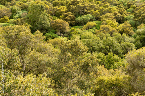 Green with yellow highlight of trees in a wooded hill