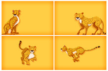 Background Template Design With Plain Color Wall And Tigers