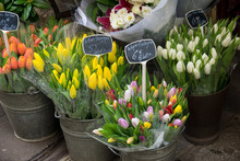 Colorful Spring Flowers In Flo...