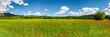 Mohnblumen Feld mit Blauem Himmel Panorama