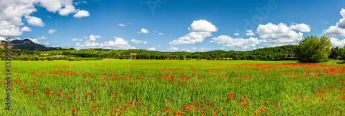 Mohnblumen Feld mit Blauem Himmel Panorama Canvas Print