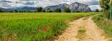 Weg Durch Mohnblumenfelder