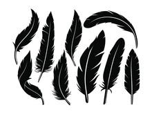 Beautiful Feather Pattern