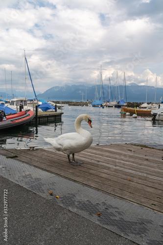 Photo cisne en el lago