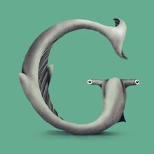 Hammerhead Shark - G