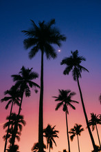 Palm Tree Asia