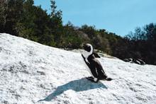 Pinguine - Boulders Beach - Simons Town - Afrika