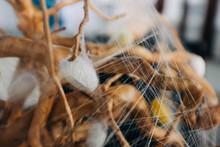 Silkworm Cocoon