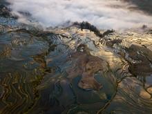 Watered Terraced Rice Fields