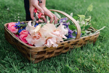 Hands Woman Laying Down Flowers In Basket