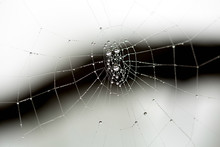 Macro Of A Spider Web