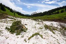 Avalanche Debris Strewn Over T...