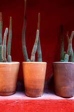 Cactus Pots Against A Red Wall