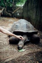 Old Endemic Turtles