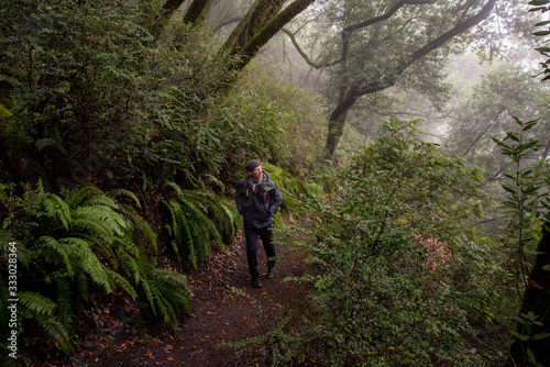 Man hikes up misty trail beside above hill covered by trees and ferns - 333028364