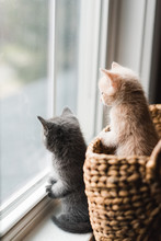 Two Cute Kittens Looking Out Of A Window From A Wicker Basket.