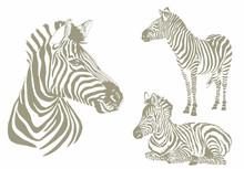 Graphical Color  Set Of Zebra ...