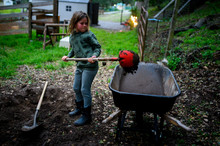 Child Shoveling Dirt With A Red Shovel Into A Wheelbarrow In The Yard