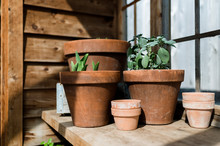 Potted Plants In Greenhouse In...