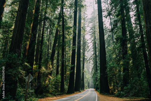 winding road with large redwood trees towering overhead during the day - 333034768