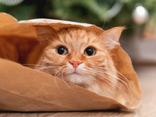 Cute Ginger Cat Is Hiding In Craft Paper Bag. Fluffy Pet In Wrapping Paper Under The Christmas Tree. Cozy Home With Decorations For New Year Celebration.