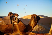 Caravan Of Camels Across The D...