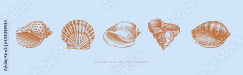 Canvastavla Collection of hand-drawn realistic seashells