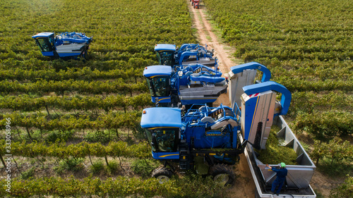 Stampa su Tela Aerial photo of grape harvesters harvesting grapes in the cape winelands in sout