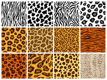 Animal Seamless Pattern Set. Mammals Fur. Collection Of Print Skins. Predators Camouflage. Cheetah Giraffe Zebra Leopard Holstein Cattle Snake Jaguar. Printable Background. Vector Illustration.