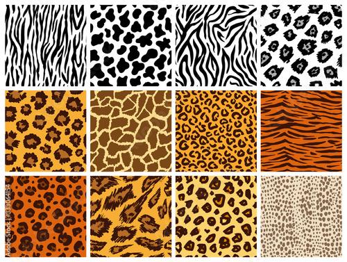 Obraz Animal seamless pattern set. Mammals Fur. Collection of print skins. Predators Camouflage. Cheetah Giraffe Zebra Leopard Holstein cattle Snake Jaguar. Printable Background. Vector illustration. - fototapety do salonu