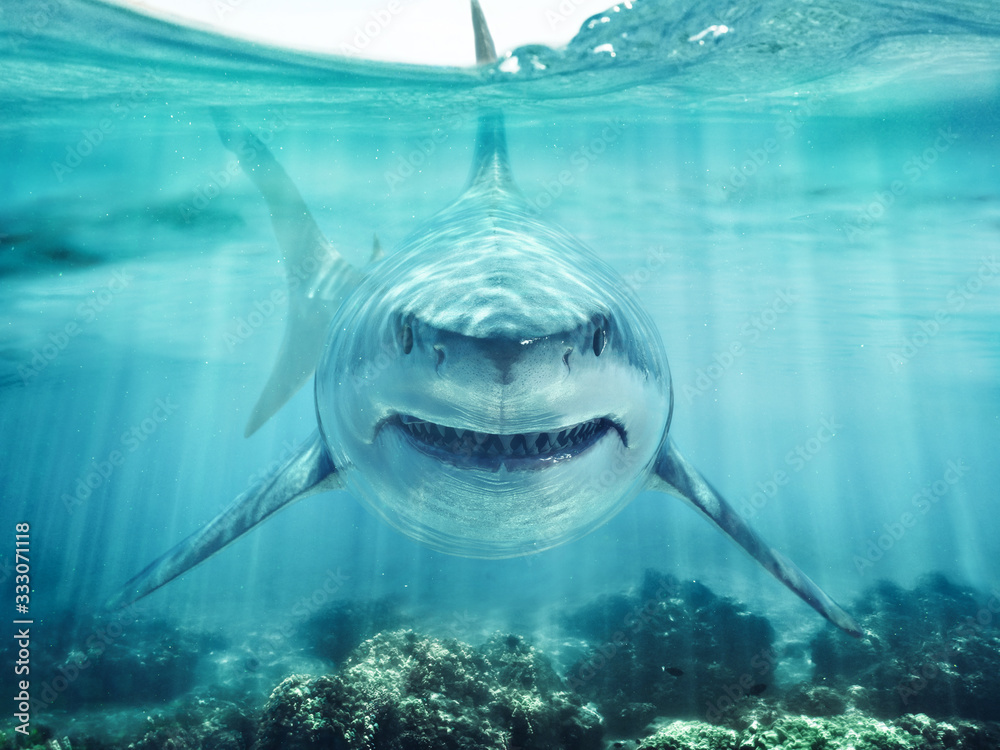 Fototapeta A predator great white shark swimming in the ocean coral reef shallows just below the water line closing in on its victim . 3d rendering with god rays