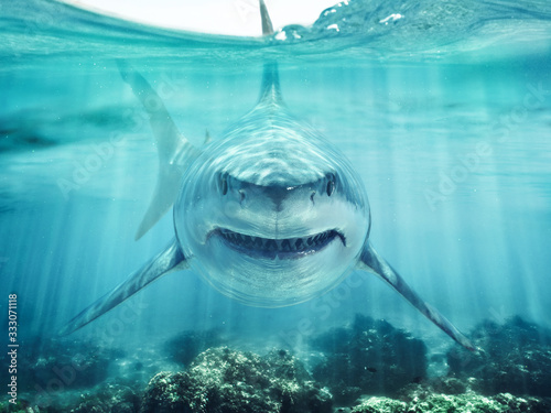 A predator great white shark swimming in the ocean coral reef shallows just below the water line closing in on its victim Tapéta, Fotótapéta