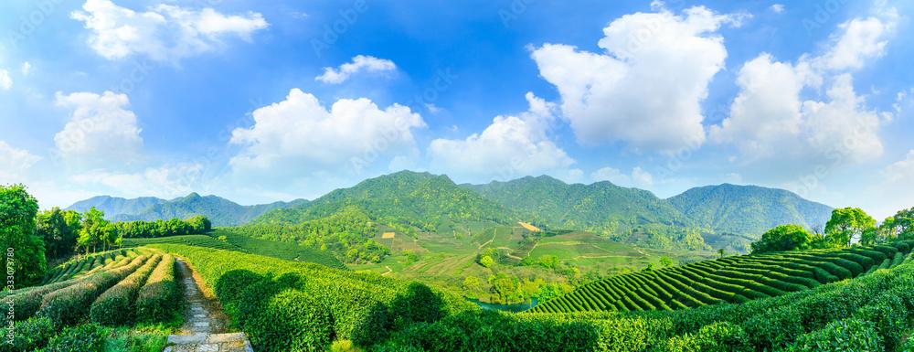 Fototapeta Green tea mountain on a sunny day,tea plantation natural background.