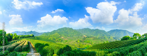 Green tea mountain on a sunny day,tea plantation natural background.