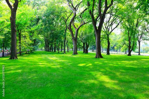 公園 セントラルパーク