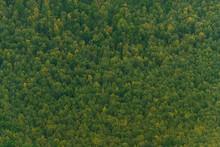 Green Carpet Of Trees On Hills...