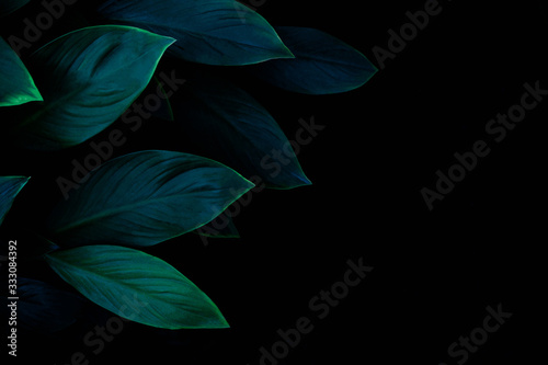 Wall mural - abstract green leaf texture, dark blue tone nature background, tropical leaf
