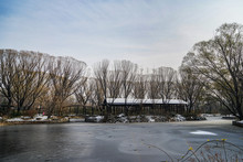 Beijing Hegezhuang Orchard In Winter