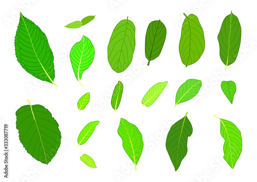 Valokuvatapetti Green Leaves fresh abstract isolated on white background illustration vector