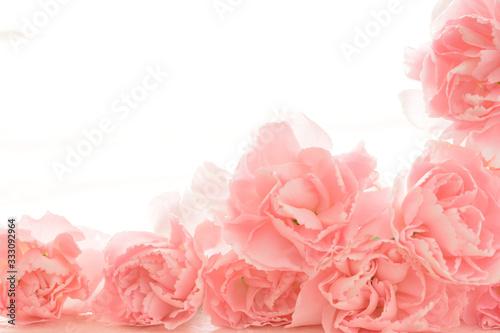 ピンクのカーネーション Canvas Print