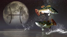 Pisces, The Two Fish, Is The Twelfth Sign Of The Zodiac. People Born Between February 18th And March 20th Have This Astrological Sign. 3D Rendering