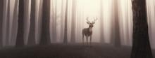 Deer Foggy Forest