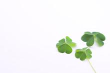 Green Clover Leaf   On White Background With Three-leaved Shamrocks