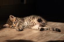 Portrait Of Cute Little Tabby ...