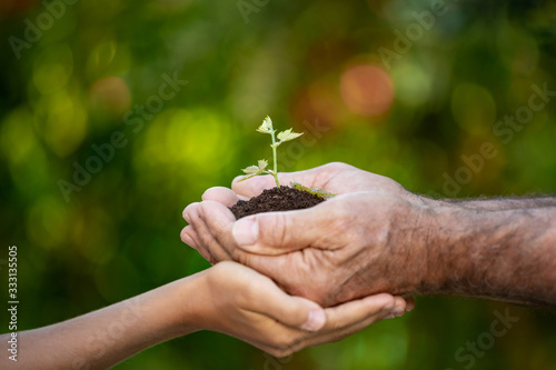 Fototapeta Senior man and child holding green sprout in hands obraz